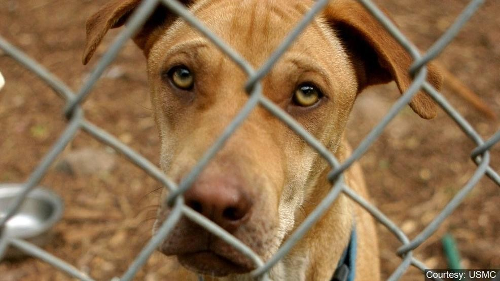 125 dogs rescued from Miami County home | WRGT